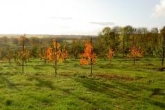 Frugtplantagen i efterårsfarver