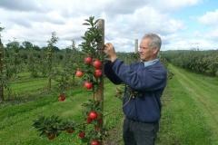 Hans Jørgen Broge i frugtplantagen