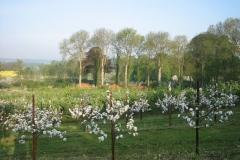 Frugtplantagen i forårsklæder